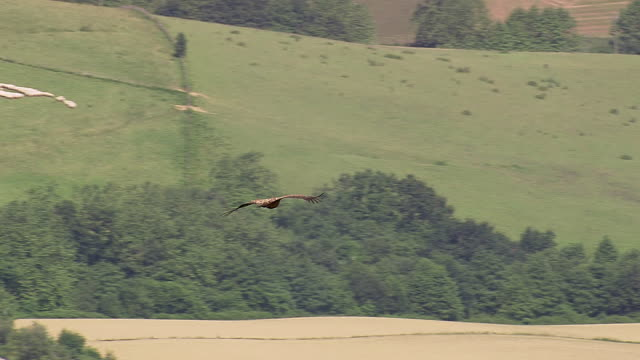 cu aerial ts shot of eagle flying over vollage / midi pyrenees, france - utfällda vingar bildbanksvideor och videomaterial från bakom kulisserna
