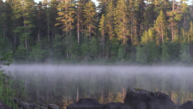 vídeos y material grabado en eventos de stock de ms shot of early morning fog on long pond with wilderness / maine, united states - tierra salvaje