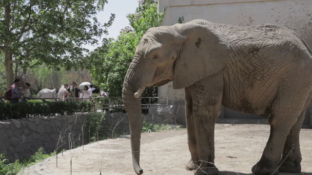 ws shot of elephant in zoo / beijing, china - 動物園点の映像素材/bロール