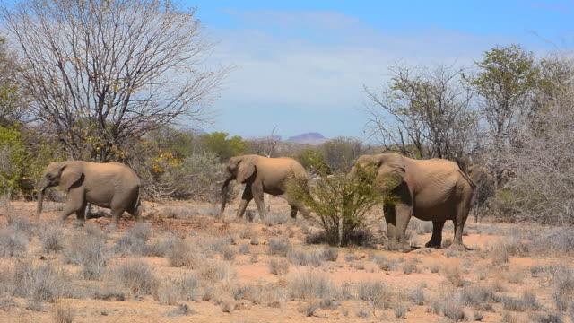 vídeos y material grabado en eventos de stock de ms shot of elephants walking in dry desert / uibasen conservacy, namibia, south africa - cuatro animales