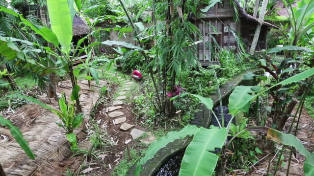 stockvideo's en b-roll-footage met ms shot of exotic garden wit h wooden house and flowing stream / ubud, bali, indonesia - tuinpad