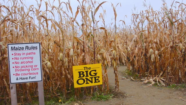 80 Top Corn Maze Video Clips & Footage - Getty Images