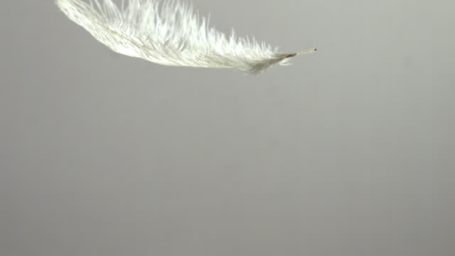Shot of Falling Feathers