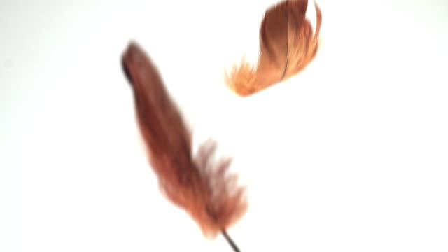 shot of falling feathers - フェザー点の映像素材/bロール