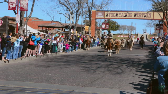 stockvideo's en b-roll-footage met ws shot of famous stockyard on main street with cowboys heading small herd of longhorn cattle down street with tourists watching for lifestyle / ft worth, texas, united states - texas longhorn