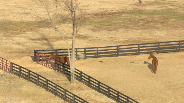 ms aerial shot of farm and horses near edgefield / south carolina, united states - 働く動物点の映像素材/bロール