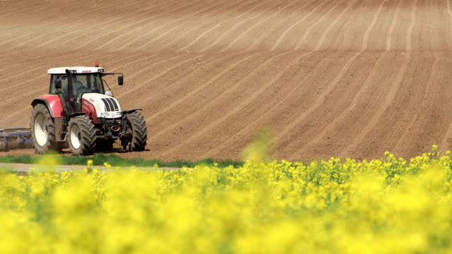 MS Shot of farmer with tractor on rapefield / Merzkirchen, Rhineland-Palatinate, Germany