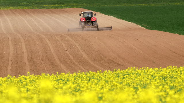 ms shot of farmer with tractor on rapefield / merzkirchen, rhineland-palatinate, germany - oilseed rape stock videos & royalty-free footage