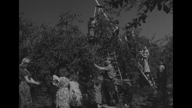 shot of farmhouse gate in foreground / three shots of two men and two women standing next to tractor man shows women medals pinned on other man's... - gesellschaftliche mobilisierung stock-videos und b-roll-filmmaterial