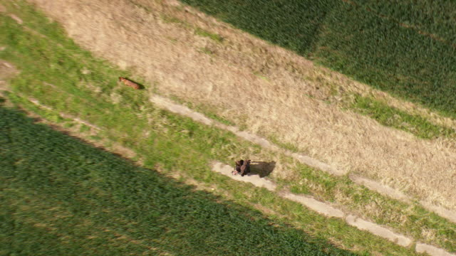 ms aerial zo shot of farmland with man and dog walking on rhoden concrete way / germany - zoom out stock videos & royalty-free footage