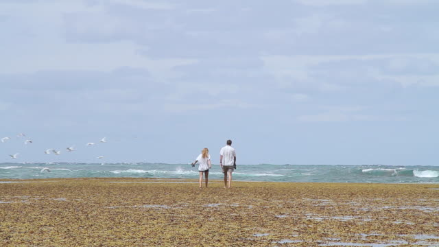 vidéos et rushes de ms shot of father and daughter walking toward ocean and birds take off / point lonsdale, victoria, australia - daughter