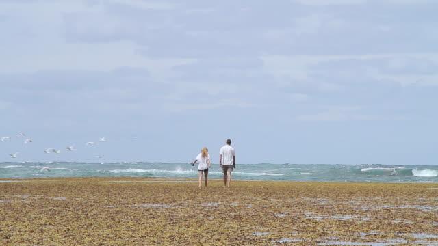 vidéos et rushes de ms shot of father and daughter walking toward ocean and birds take off / point lonsdale, victoria, australia - fille de