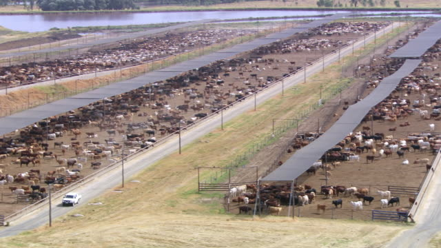ws pan shot of feedlots / roma, queensland, australia - ranch stock videos & royalty-free footage