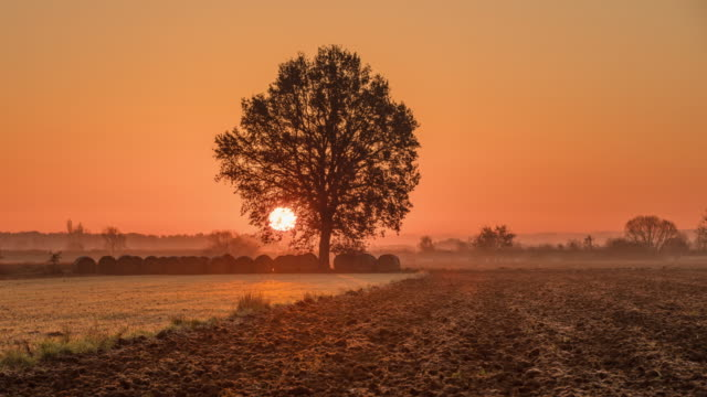 T/L 8K shot of field and a tree in sunrise