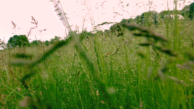 MS POV Shot of field of grass as bugs fly / Morristown, New Jersey, United States