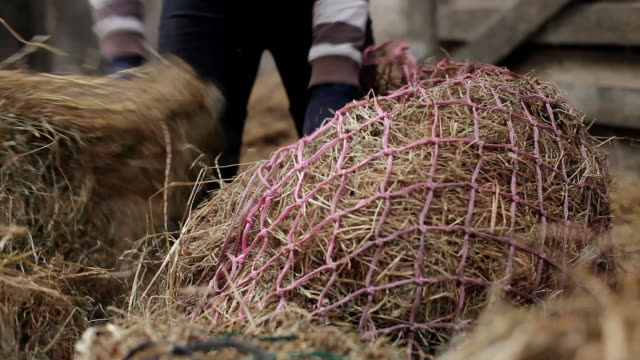 cu shot of filling horse hay bags / helland, bodmin, cornwall, united kingdom - hay stock videos and b-roll footage