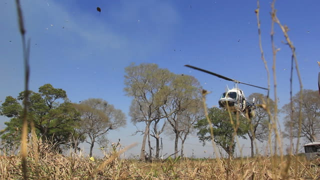 ms shot of firefighters helicopter landing at farmland / corumba, mato grosso do sul, brazil - helicopter landing stock videos & royalty-free footage