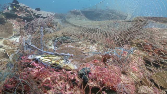 MS Shot of fish caught in ghost nets / Kota Kinabalu, Sabah, Malaysia