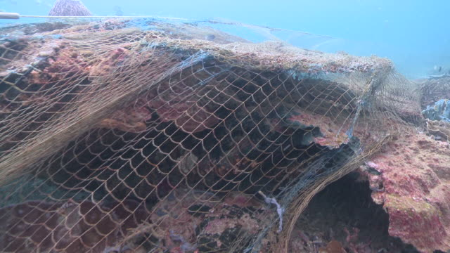 ms pov shot of fish caught in ghost nets / kota kinabalu, sabah, malaysia  - fishing net stock videos & royalty-free footage