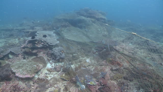MS POV Shot of fish caught in ghost nets / Kota Kinabalu, Sabah, Malaysia
