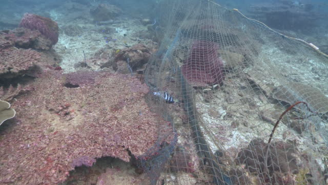 ms pov shot of fish caught in ghost nets / kota kinabalu, sabah, malaysia  - trapped stock videos & royalty-free footage