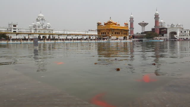 MS T/L Shot of fish in pond of Golden Temple (Sikh temple) / Amritsar, Punjab, India