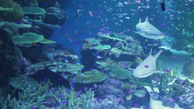 ms shot of fishes and sharks swimming in aquarium / sinagawa, tokyo, japan - 水族館点の映像素材/bロール