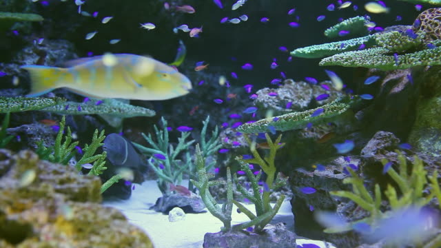 ms shot of fishes swimming around corals / sinagawa, tokyo, japan - 水族館点の映像素材/bロール