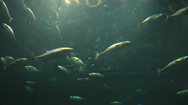 ms la shot of fishes swimming in aquarium / kasai, tokyo, japan - 水族館点の映像素材/bロール