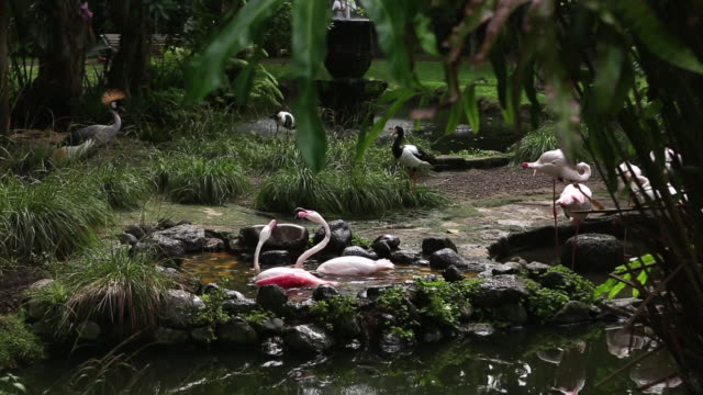 ms shot of flamingos sitting in fountain water / ubud, bali, indonesia - ubud district stock videos & royalty-free footage