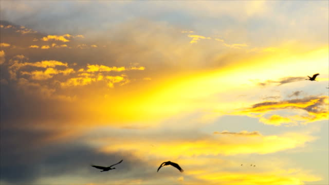ms shot of flock of cranes flying under orange clouds / hula valley, upper galilee, israel - morning stock videos & royalty-free footage