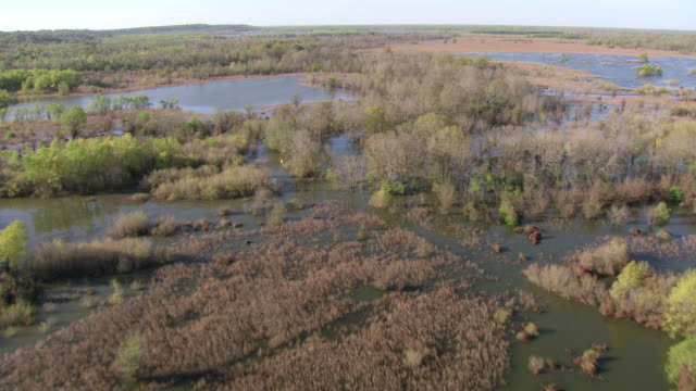 MS AERIAL Shot of flooded Mississippi river with trees in water / Louisiana, United States