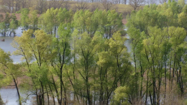 CU AERIAL Shot of flooded Mississippi river with trees in water/ Louisiana, United States