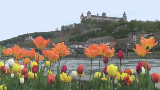 ms shot of flower infront of river main with fortress marienberg / wurzburg, bavaria, germany - wurzburg stock videos and b-roll footage