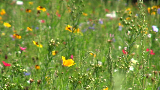 ms shot of flower meadow / trier, rhineland palatinate, germany - meadow stock videos & royalty-free footage