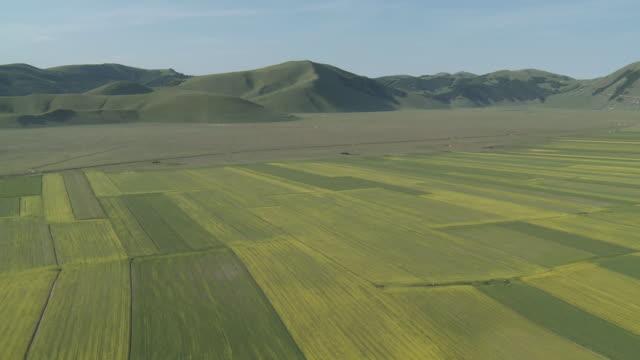 vídeos de stock, filmes e b-roll de ws shot of flowering lentils and oilseed fields / castelluccio di norcia, umbria, italie - umbria