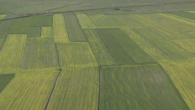 vídeos y material grabado en eventos de stock de ms zo shot of flowering lentils and oilseed fields  / castelluccio di norcia, umbria, italie - tierra cultivada