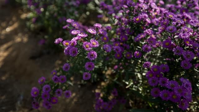 Shot of Flowers at Bucheon Landfill