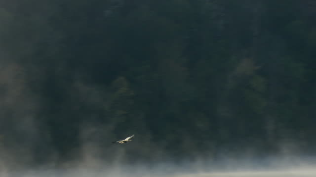 MS AERIAL TS Shot of flying seagull over Black Warrior River in Tuscaloosa County / Alabama, United States