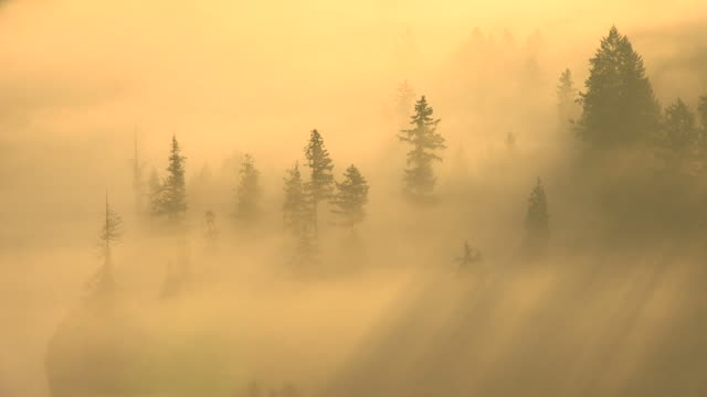 ms t/l shot of fog moving over woodland at saarschleife at morning / mettlach, saarland, germany - nebbia video stock e b–roll