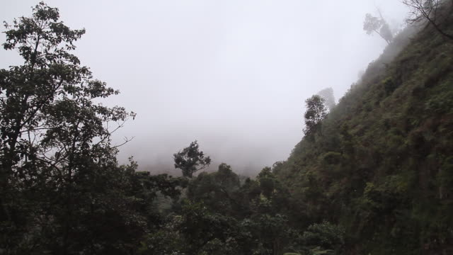 MS ZO Shot of fog rolling over forest with cloudy skies and trees / bwindi, kabale, uganda