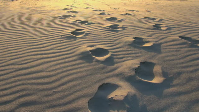 MS Shot of footmarks on sea coast and sea sand flying by wind, North Sea North Frisia, / St. Peter Ording, Schleswig Holstein, Germany