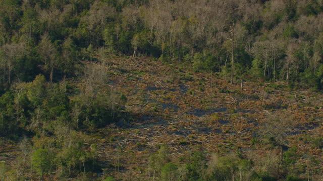 ms aerial shot of forest and marsh / south carolina, united states - 湿地点の映像素材/bロール