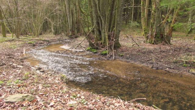 ms shot of forest creek / saarburg, rhineland-palatinate, germany - saarburg stock-videos und b-roll-filmmaterial