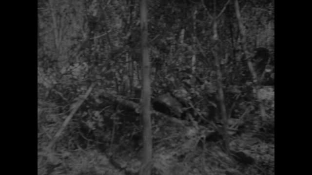 shot of forest / various shots of tanks waiting in forest / soldiers climbing into tank / close view of front of tank / two close views of soldier in... - war stock-videos und b-roll-filmmaterial