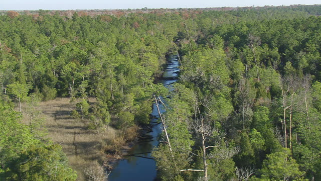 MS AERIAL Shot of Francis Marion Forest with lake / South Carolina, United States
