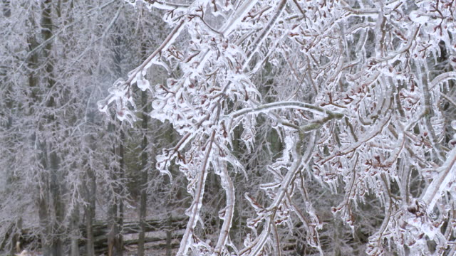 ms shot of freezing rain falling on icy branches / tweed, ontario, canada - branch plant part stock videos & royalty-free footage