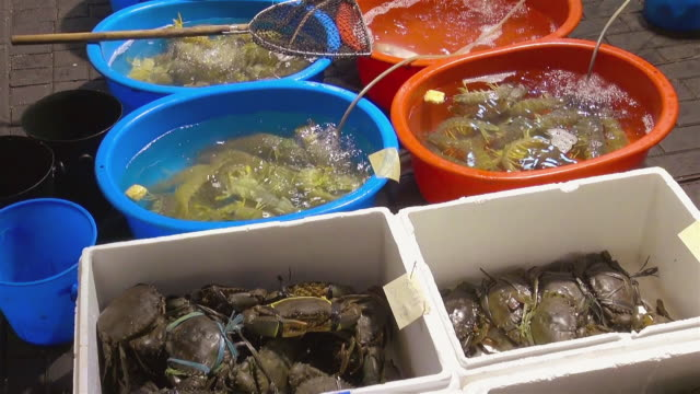 cu tu shot of fresh crabs and shrimp sold in kowloon / hong kong, special administrative region, china - washtub stock videos and b-roll footage