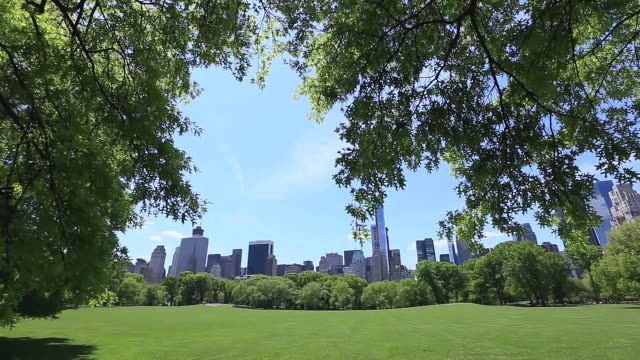 ms shot of fresh green trees and manhattan skyscraper from sheep medow at early spring / new york, united states  - sheep meadow central park stock videos and b-roll footage