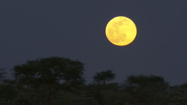 cu shot of full moon / tanzania - full moon stock videos & royalty-free footage